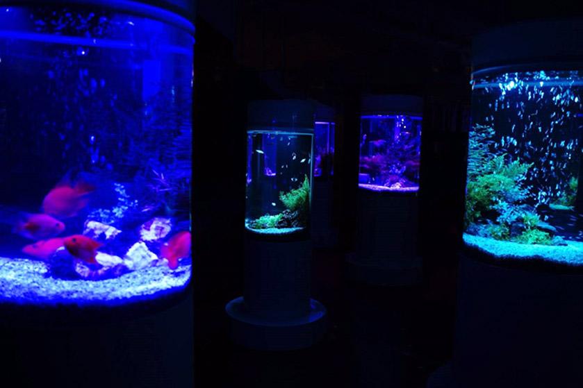 期間限定で、ショッピングモールに水族館!? 宝石のような世界の魚が見られる 「ジュエリーアクアリウム」@イオンモール木更津