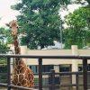 【横浜】開園70周年!「野毛山動物園」は魅力がいっぱい!