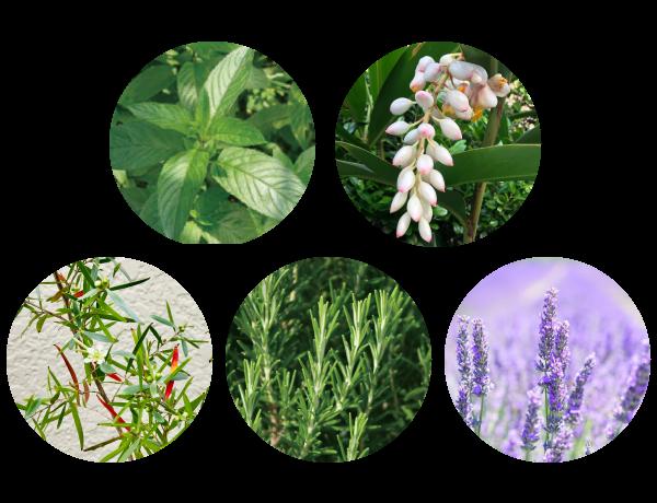 香りはハッカ精油をベースに、月桃、ティーツリー、ローズマリー、ラベンダー精油を配合。 心地よい清涼感のある香りが広がり、気持ちがリフレッシュします。鼻がムズムズする時、運転中や仕事中、勉強中に眠気を感じる時などにお使いいただくのもおすすめです。 これからの季節の乾燥、肌荒れ対策のアイテムにいかがでしょうか。