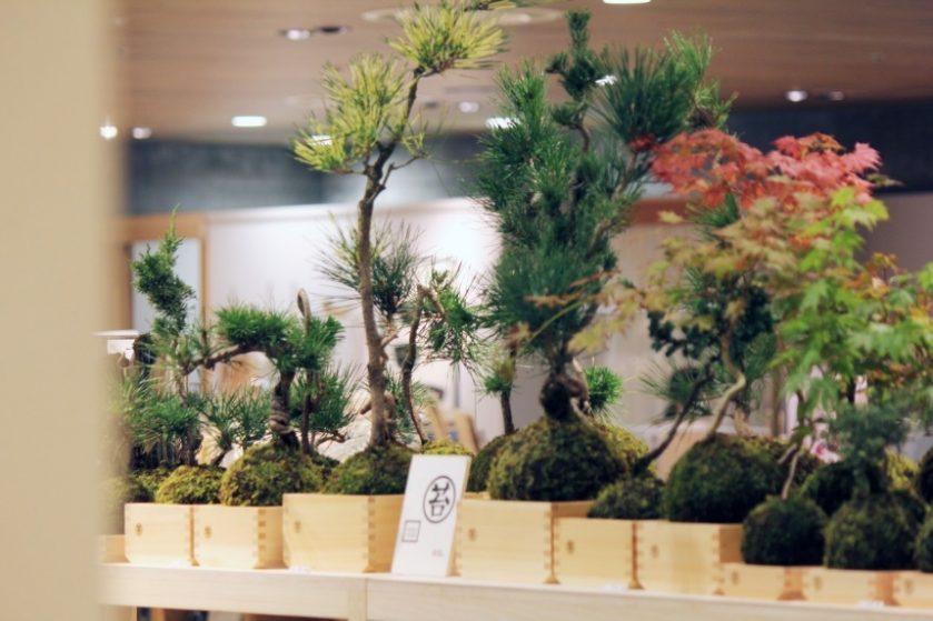 OPEN記念!癒やしの贈り物「MASU MOSS(マスモス)苔玉盆栽」限定販売